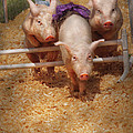Farm - Pig - Getting past hurdles Print by Mike Savad