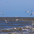 Feed us - Ferry to Galveston TX Print by Susanne Van Hulst