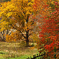 Fence in autumn Poster by Randall Branham