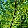 Fern Detail Poster by Himani - Printscapes