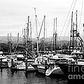 Fishing Boats . 7D8208 Poster by Wingsdomain Art and Photography