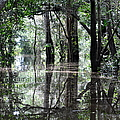 Flooded Amazon Rainforest Poster by Oliver J Davis Photography