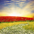 floral field on sunset Print by Setsiri Silapasuwanchai