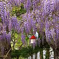 Flower - Wisteria - A house of my own Print by Mike Savad