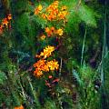 Flowers in the Woods at the Haciendia Print by David Lane