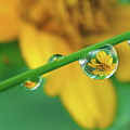 Flowers In Water Droplets Poster by Thank you.