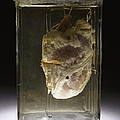 Forensic Evidence, Heart Perforated Print by Science Source