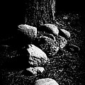 Forest Feng Shui Print by The Forests Edge Photography - Diane Sandoval