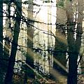 Forest Sunrise Print by Paul Sachtleben