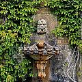 Fountain In The Walled Garden, Florence Print by The Irish Image Collection