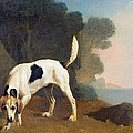 Foxhound on the Scent Print by George Stubbs