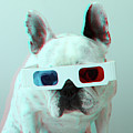 French Bulldog With 3d Glasses Print by retales botijero