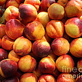 Fresh Nectarines - 5D17815 Poster by Wingsdomain Art and Photography