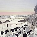 Friesians in Winter Print by Maggie Rowe
