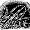 Frost On Blades Of Grass, Woodcut Print by Gary Hincks