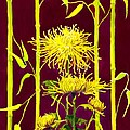 Fuji Mums and Bamboo Poster by Janis Grau
