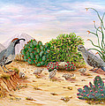 Gambel Quails Day in the Life Print by Judy Filarecki