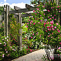Garden with roses Print by Elena Elisseeva