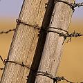 Gate Posts Join A Barbed Wire Fence Poster by Gordon Wiltsie