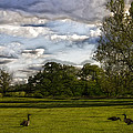 Geese on Painted Green 2 Poster by Bill Tiepelman