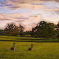 Geese on Painted Green Poster by Bill Tiepelman