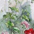 Geraniums Poster by Stephanie Aarons