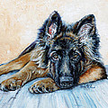 German Shepherd Print by Enzie Shahmiri