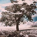 Giant Tree in City Print by Hag