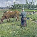 Girl Tending a Cow in Pasture Print by Camille Pissarro