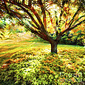 Golden Afternoon Print by Linde Townsend