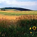 Golden Fields Forever Print by Kathy Yates