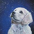 Golden Retriever Pup in Snow Poster by L A Shepard