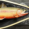 Golden Trout River Slice Print by Eric Knowlton