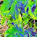 Grape Leaves Print by Will Borden