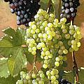 Grapes Poster by Edward Chalmers Leavitt