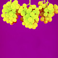 Grapes Poster by Johnny Greig