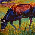 Grazing Texas Longhorn Poster by Marion Rose