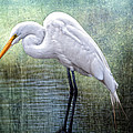 Great White Egret Poster by Bonnie Barry