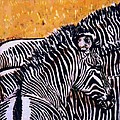 Grevy Colt Poster by Dy Witt