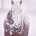 Grey Pony In Red Rug Print by Sasha Bell
