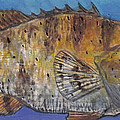 Grouper Print by Edward Walsh