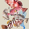 Grouper Montage Poster by KEVIN BRANT