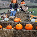 Halloween Pumpkin Patch 7D8476 Poster by Wingsdomain Art and Photography