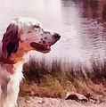Handsome Hunter. English Setter Print by Jenny Rainbow