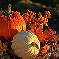 Harvest colors Poster by Sandra Cunningham