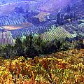 Harvest Time at the Vineyard Poster by Elaine Plesser
