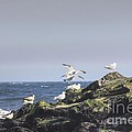 HDR Seagulls at Play Print by Pictures HDR