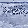 HDR Seagulls at Play in the Sand Print by Pictures HDR