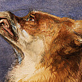 Head of a Fox Print by John Frederick Lewis