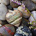 Heart stone with wild flower Poster by Garry Gay